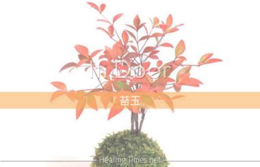 可愛い苔玉に癒されるミニ盆栽苔玉のあるインテリア空間に!部屋で四季を楽しむミニ植物